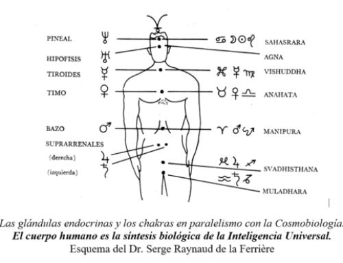 El Sistema Planetario Humano: los 7 Chakras